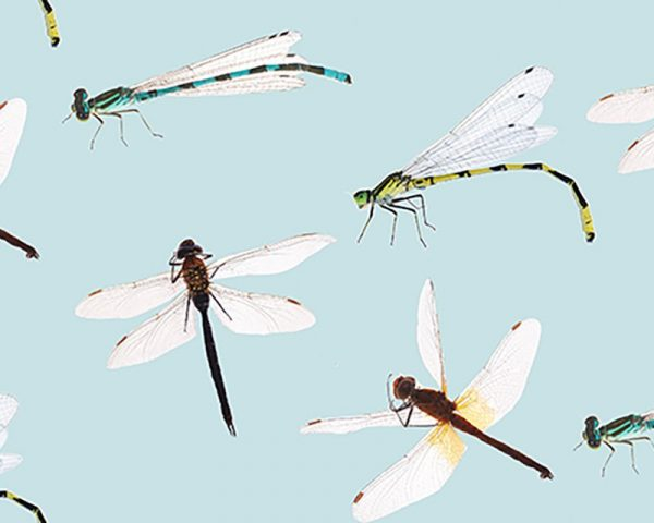 dragonfly cotton